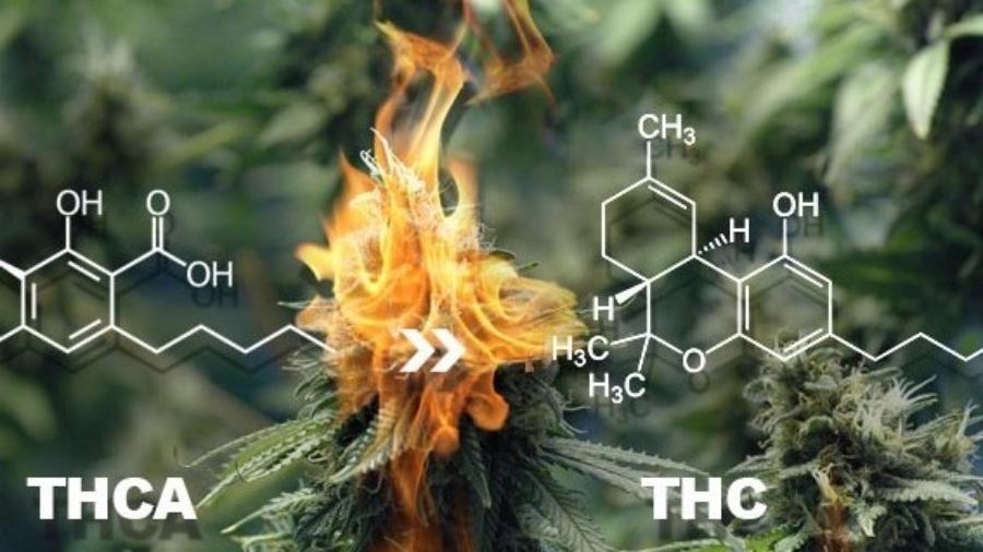 THCA Vs THC