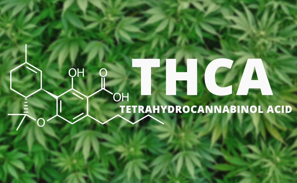 What is THCA?