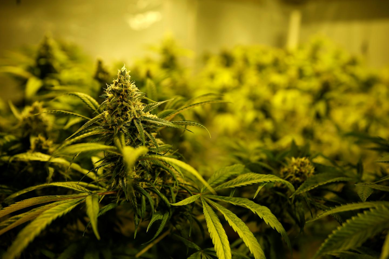 Schumer Hosts First Marijuana Meeting To Formulate 2021 Legalization Plan
