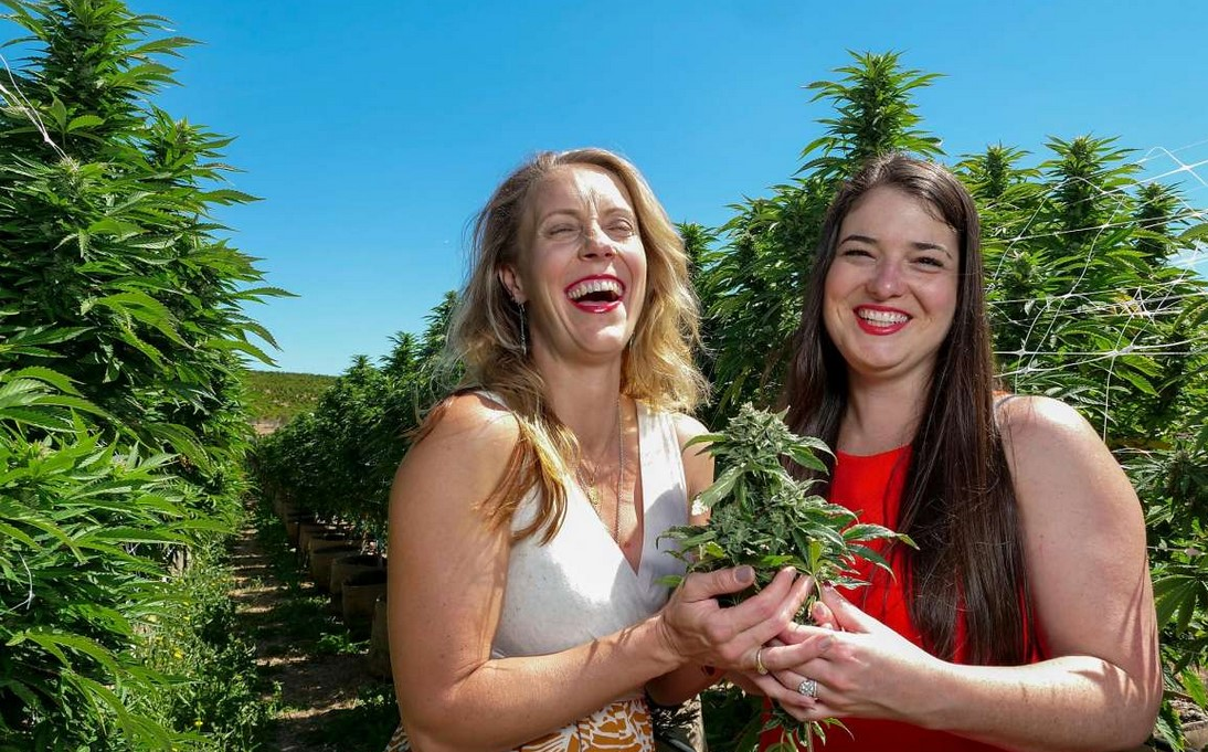 Why Does Cannabis Make You Laugh?