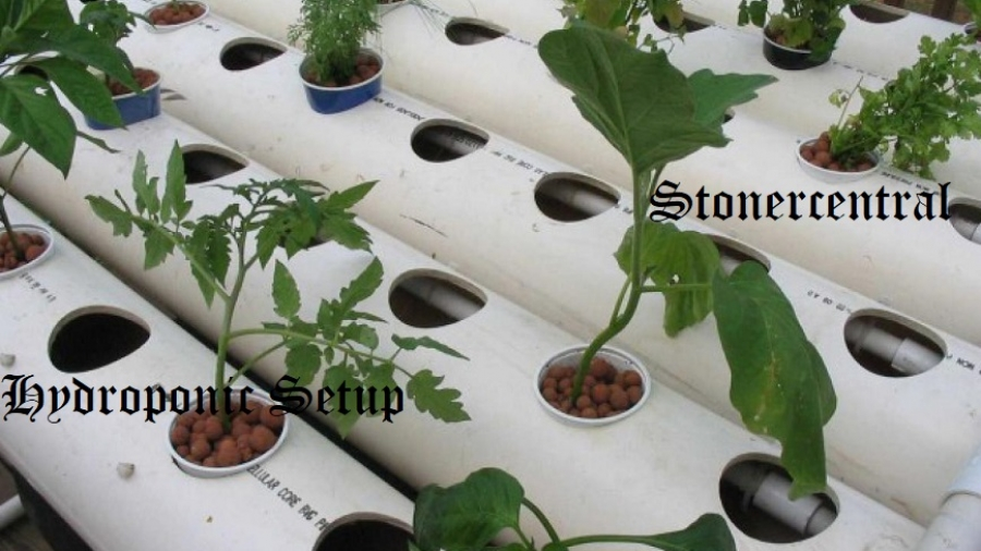 hydroponic setup