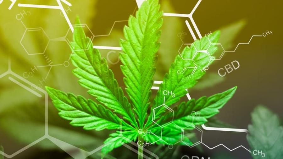 Chemical structure of marijuana