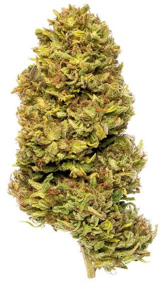 best cbd strains