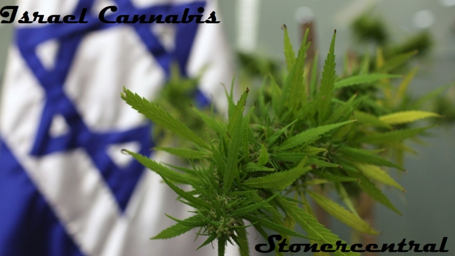 israel cannabis