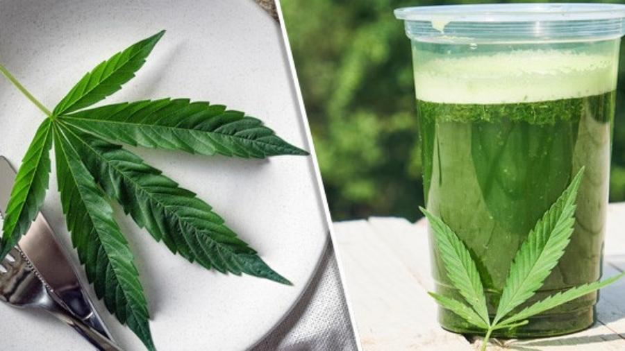 fresh cannabis leaves uses