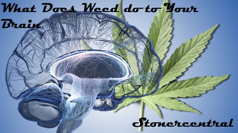 what does weed do to your brain