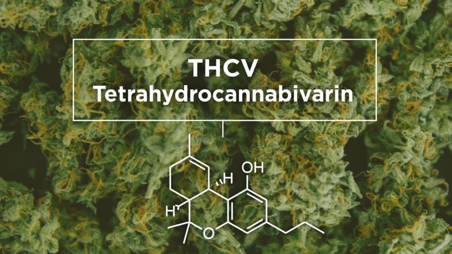 THCV VS THCA