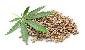 growing marijuana from seed