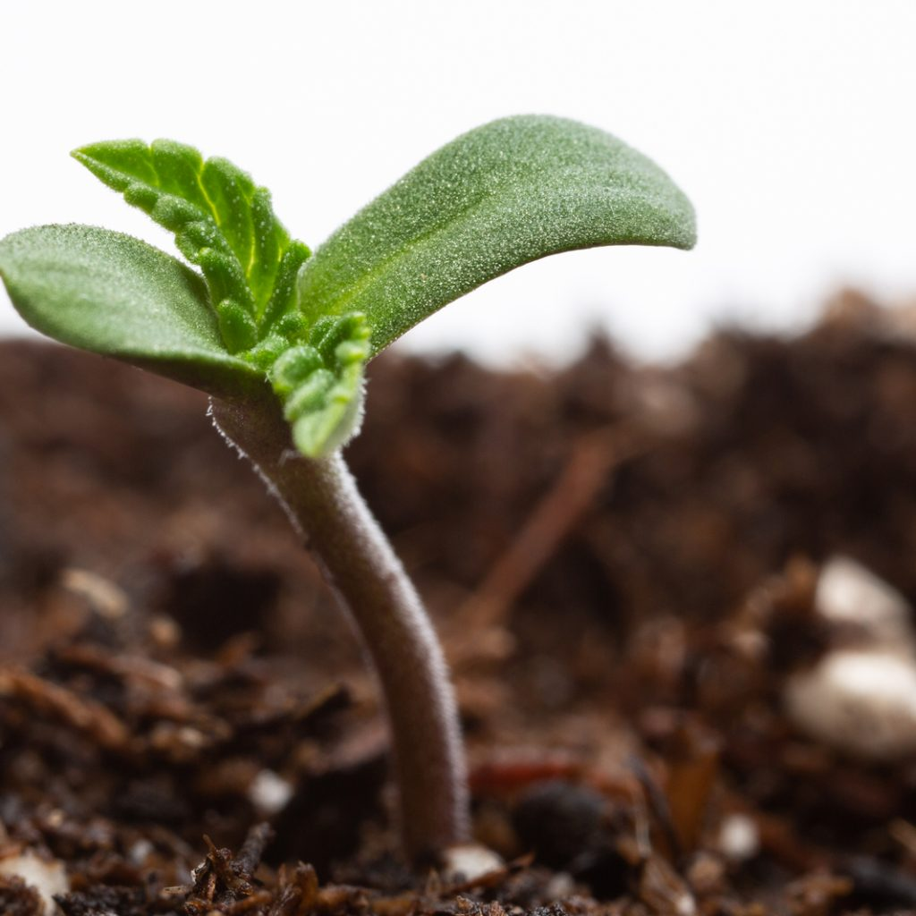 when to harvest pot plants