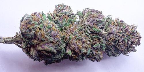 what makes cannabis purple