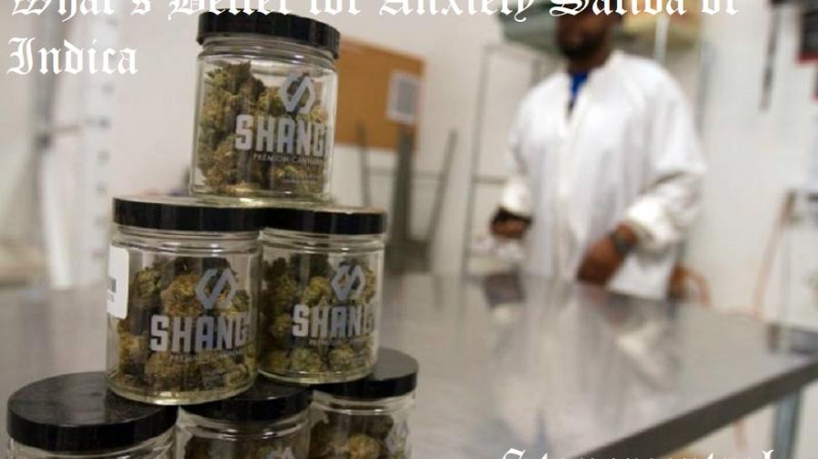 Marijuana-Strains-for-Anxiety-img