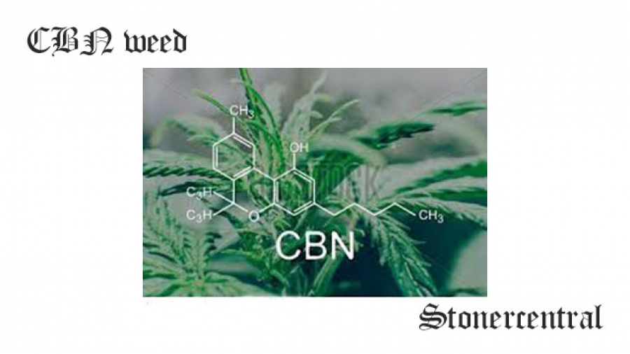 CBN weed