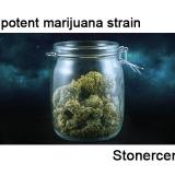 Most potent marijuana strain