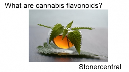 What are cannabis flavonoids