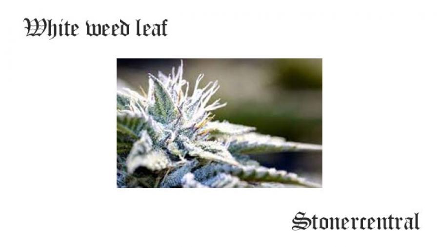 White weed leaf