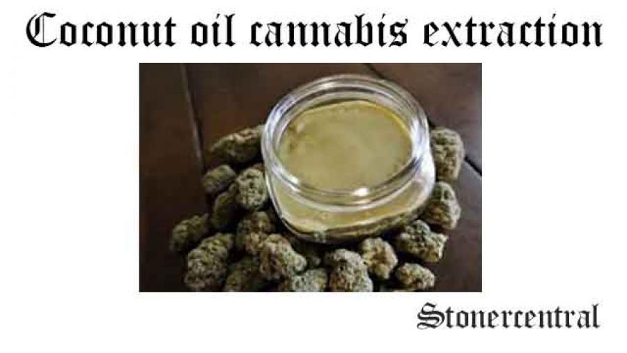 coconut oil cannabis extraction