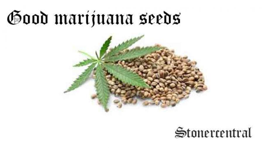 good marijuana seeds