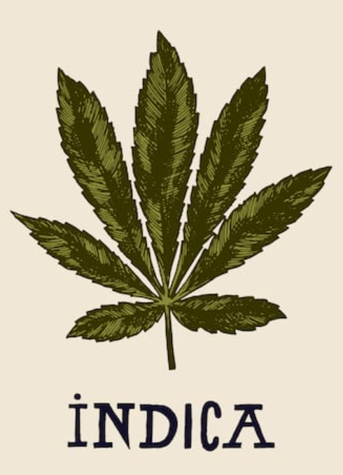 what is indica weed