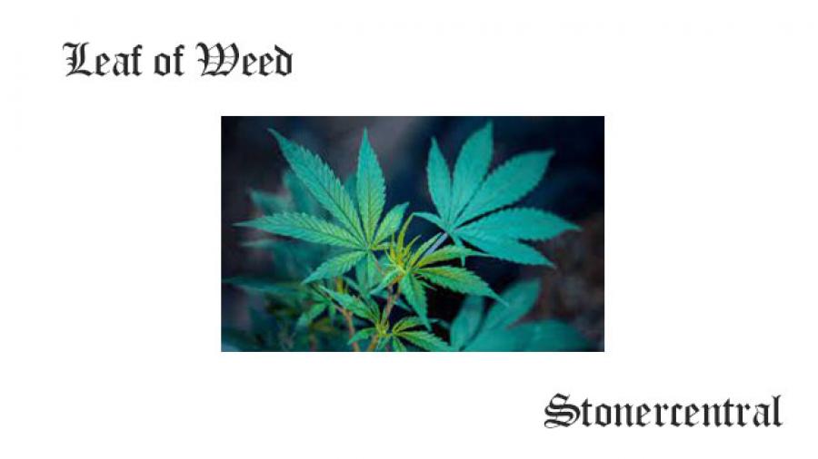 leaf of weed